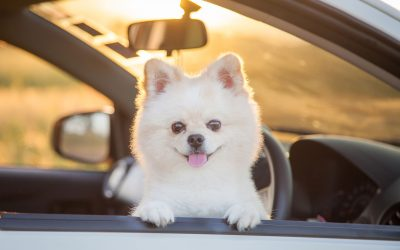 Restraining Dogs While Driving